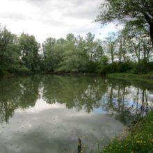 Levo v gozdu 1