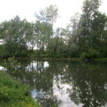 Levo v gozdu 3