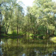 Levo v gozdu 6