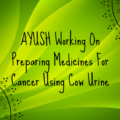 AYUSH Working On Preparing Medicines For Cancer Using Cow Urine